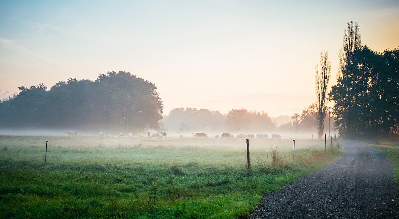 the-oaks-ranch-estate-mossy-point-field-foggy   The Oaks Ranch Estate